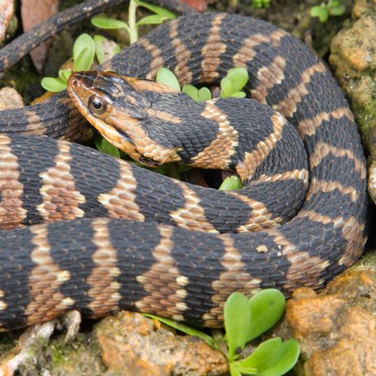 Schlangen Megazoo Fur Tiere Das Grosste
