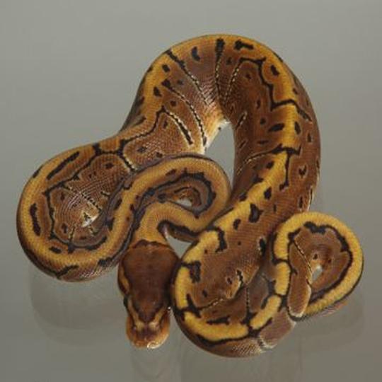 Schlangen Megazoo F R Tiere Das Gr Te